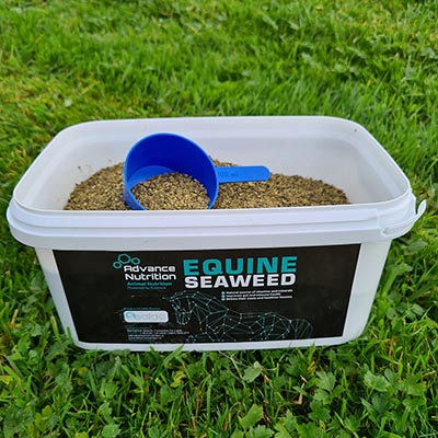advance-nutrition-product-equine-seaweed-powder