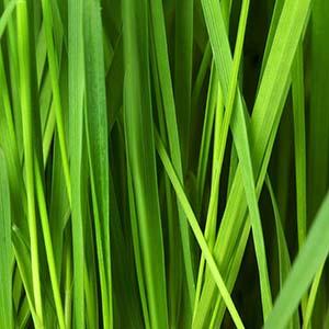 advance-nutrition-ireland-grass-box