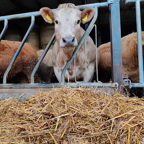 advance-animal-nutrition-beef-elite